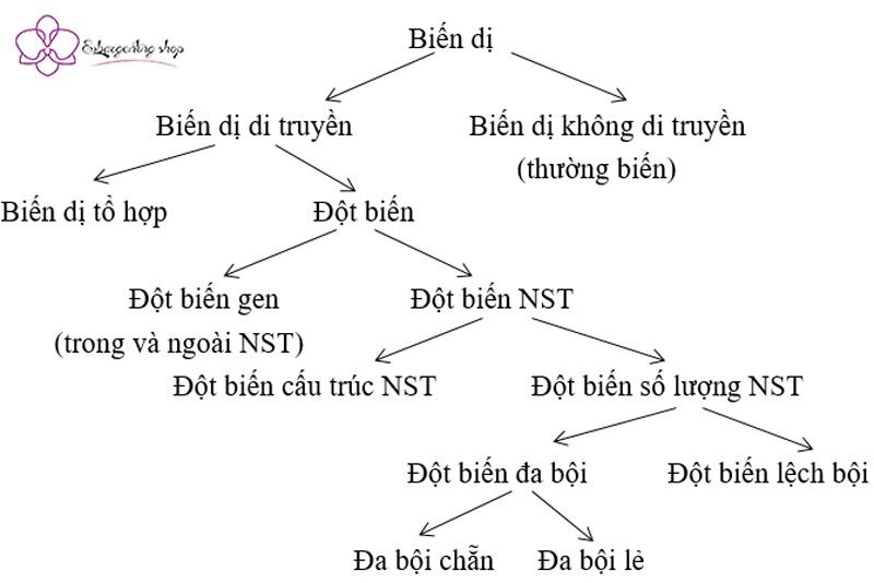 sơ đồ các loại biến dị trong biến dị sinh học