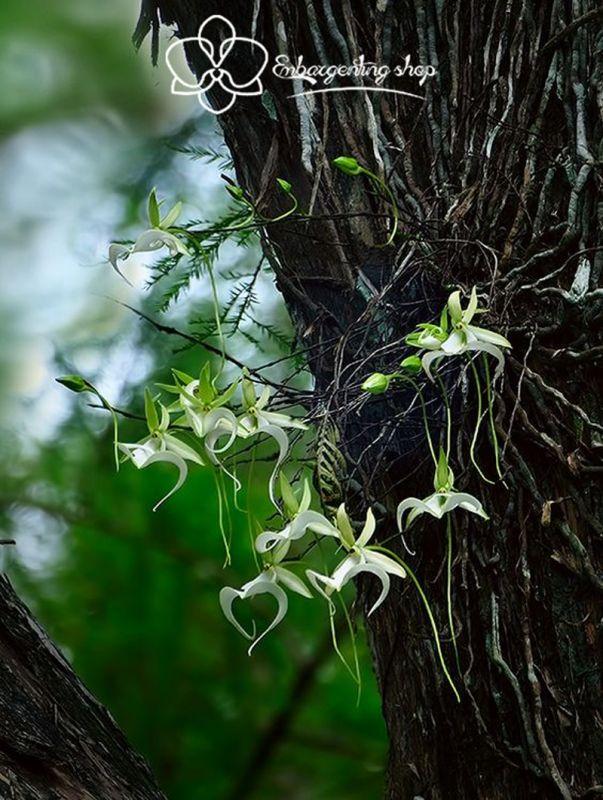 hoa lan rừng 2