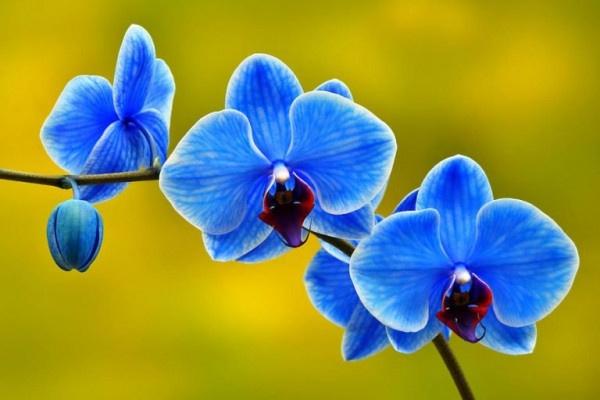 nghệ thuật cắm hoa lan Hồ Điệp tuyệt đẹp