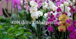 Giới thiệu về Embargenting Shop