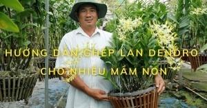 Hướng dẫn cách ghép hoa lan Dendro cho nhiều mầm non