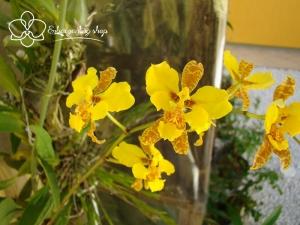 Tên những loại hoa lan đẹp hút, được trồng nhiều nhất nước ta